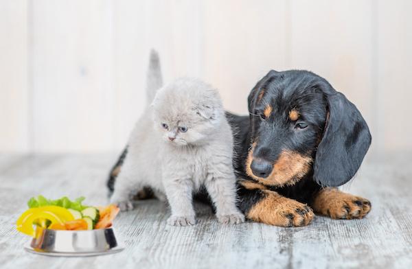 Alimentazione del Cane e del Gatto