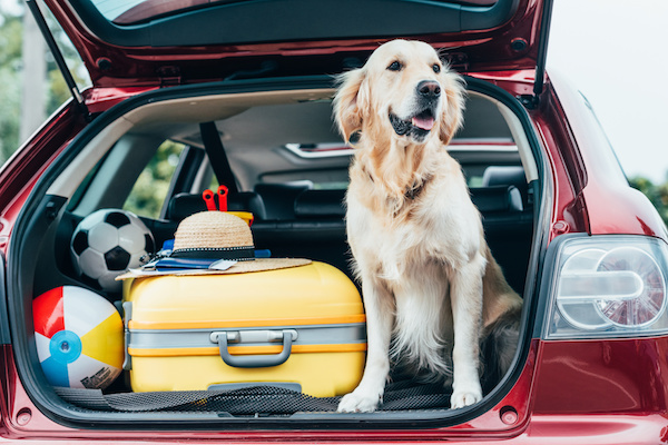 Viaggi con il Proprio Pet